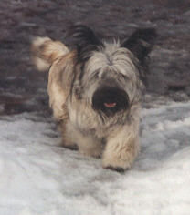 Duncan walking in the snow, February 2000